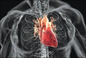 See The Big Picture to Avoid Heart Disease